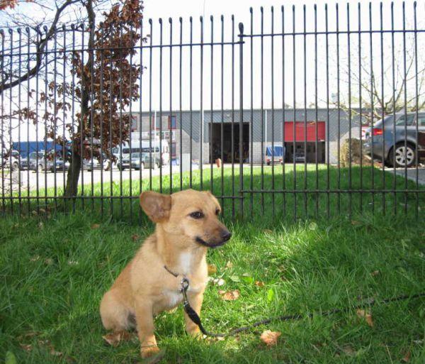 Garten- Hundezaun Graz engmaschig in Eisen roh zur Grundstücksabgrenzung